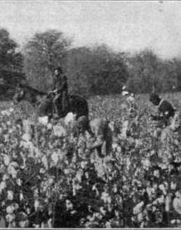 Fig-6-Picking-cotton